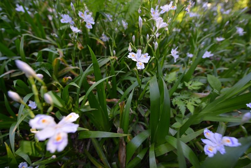 春の花 広角にて-4