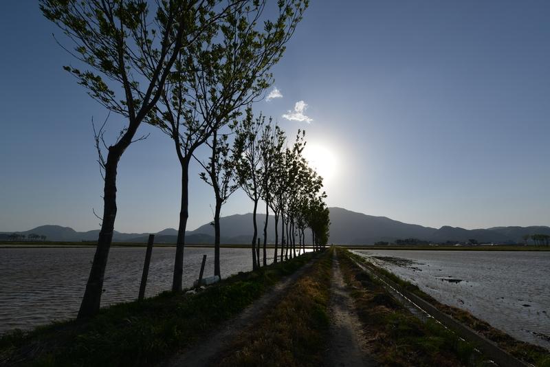 田植え期の弥彦山-5