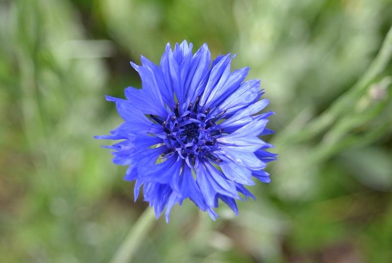 カーブドッチの花たち-10