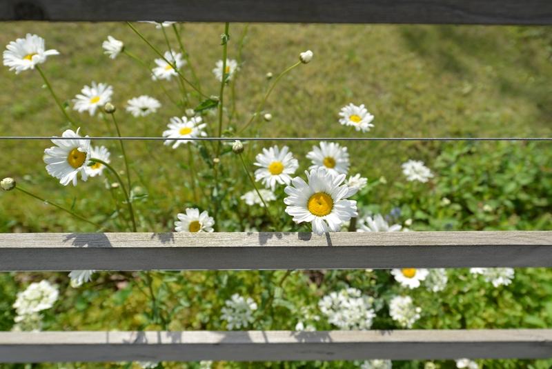 カーブドッチの花たち-11