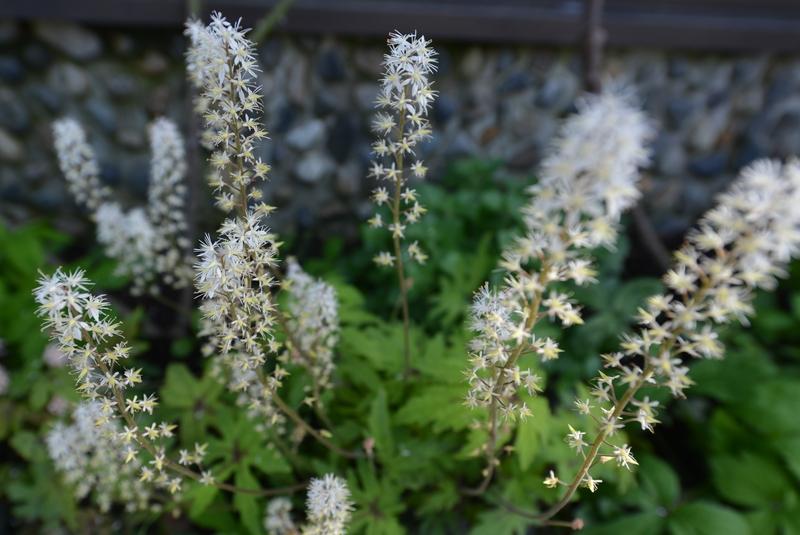 カーブドッチの花たち-2