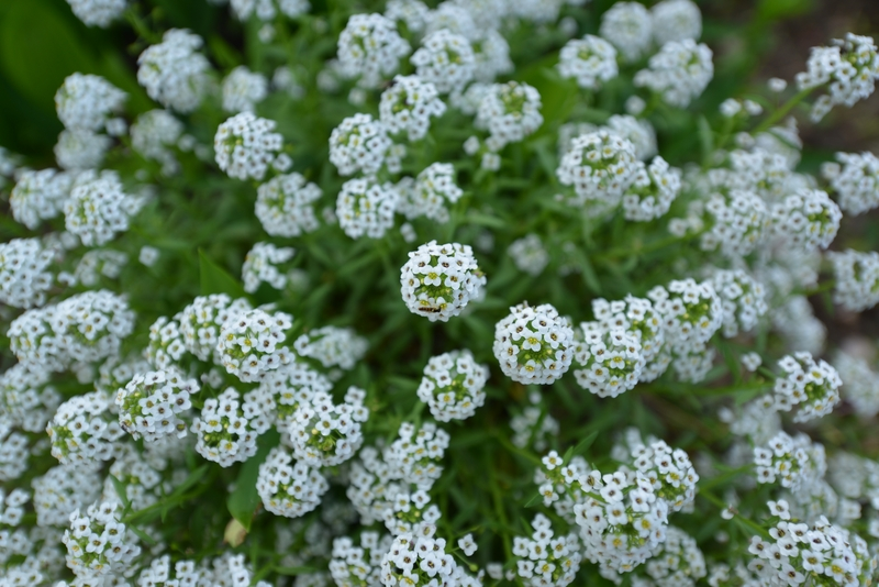 カーブドッチの花たち-3