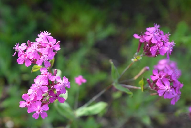 カーブドッチの花たち-4