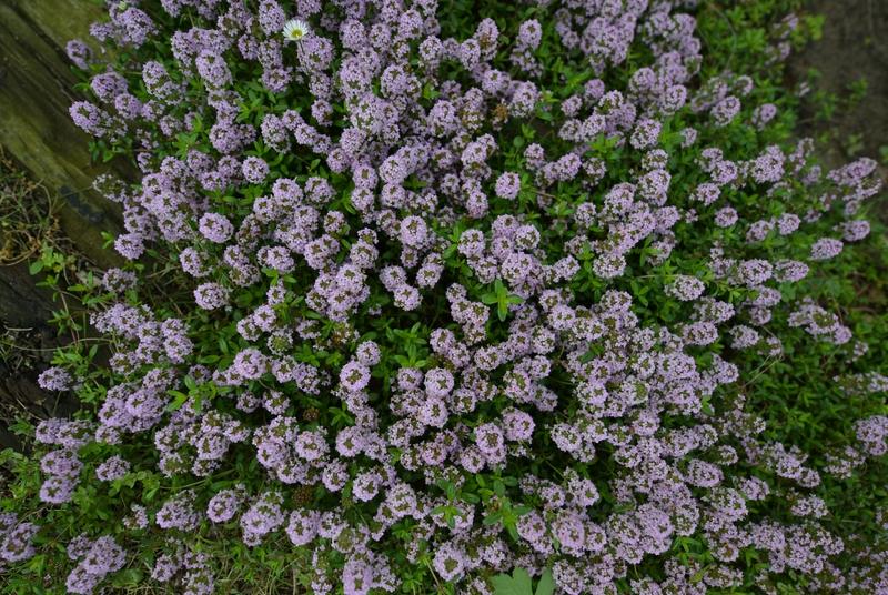 カーブドッチの花たち-6