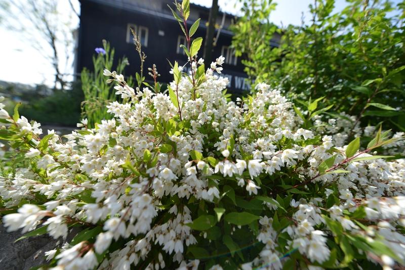カーブドッチの花たち-8