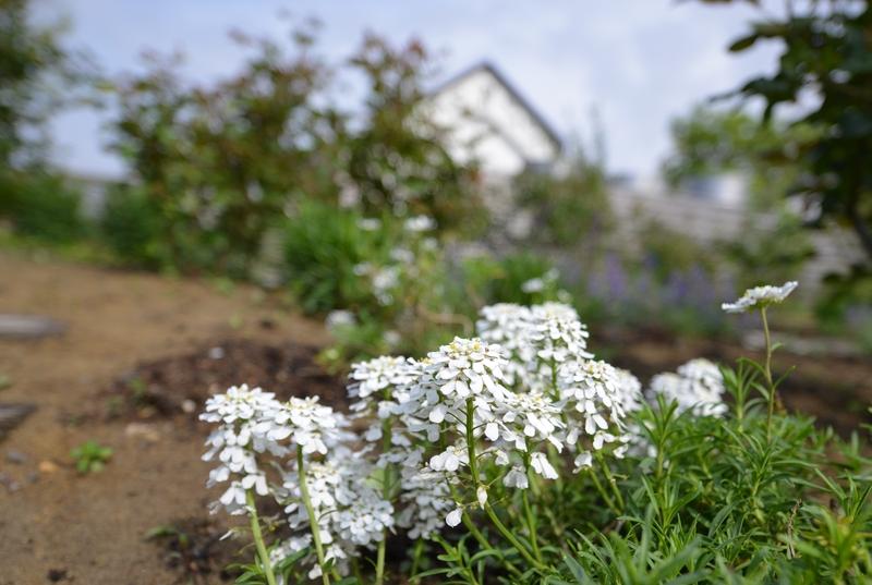 カーブドッチの花たち-9