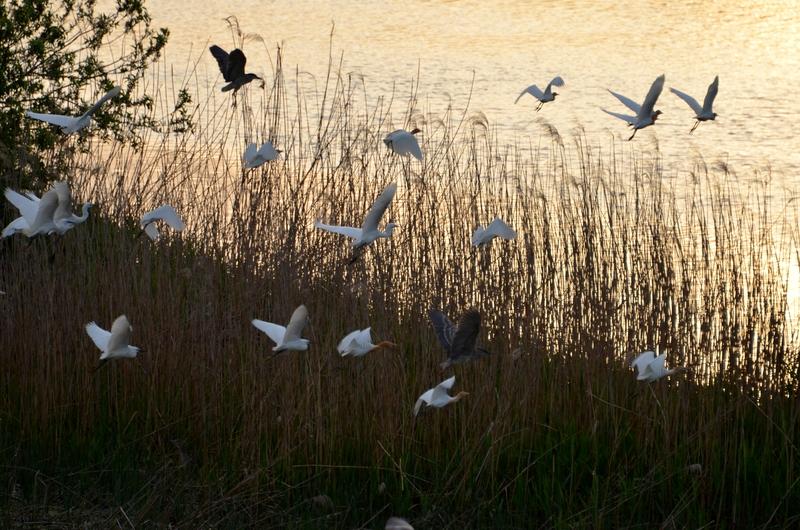 河原の鳥たち-3