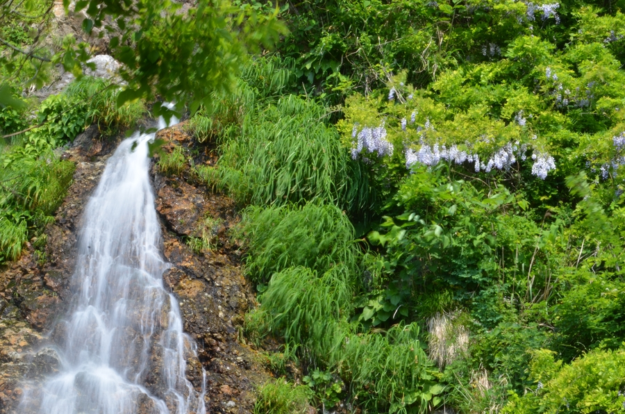 新緑の浜滝-5