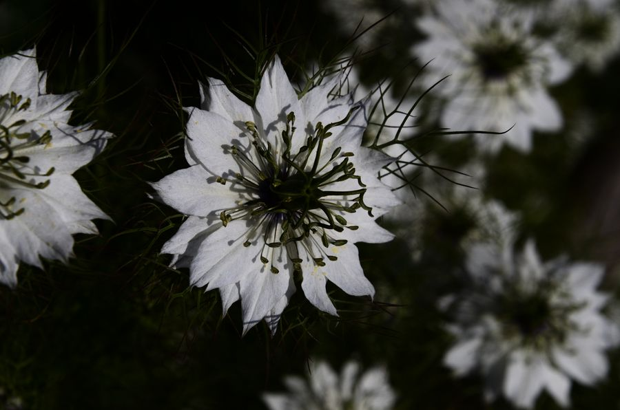 花たち シルエット-1