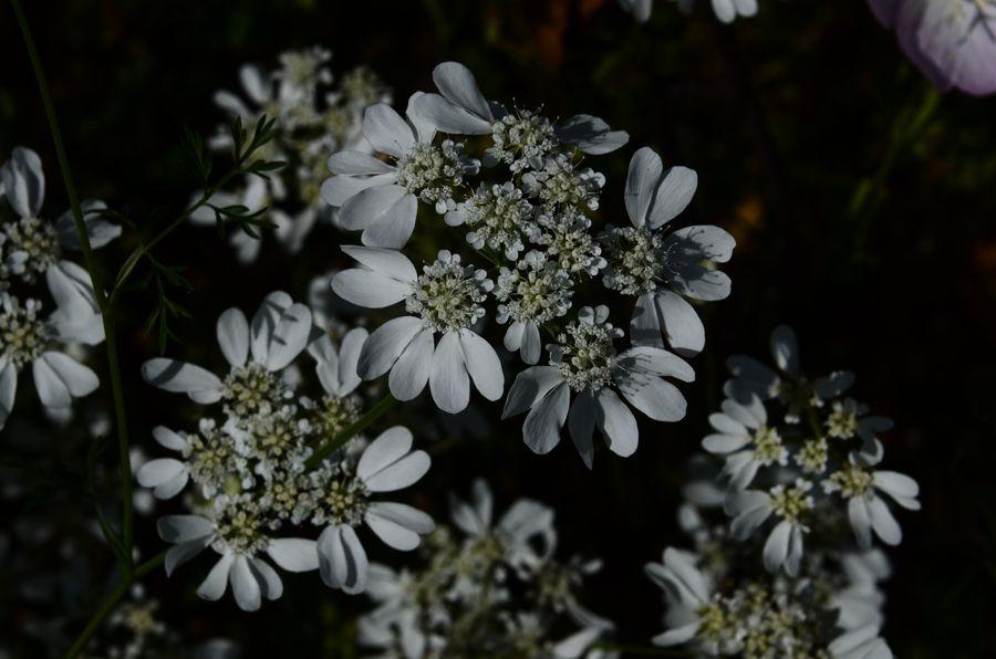 花たち シルエット-2