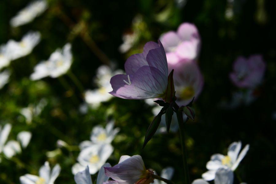 花たち シルエット-5