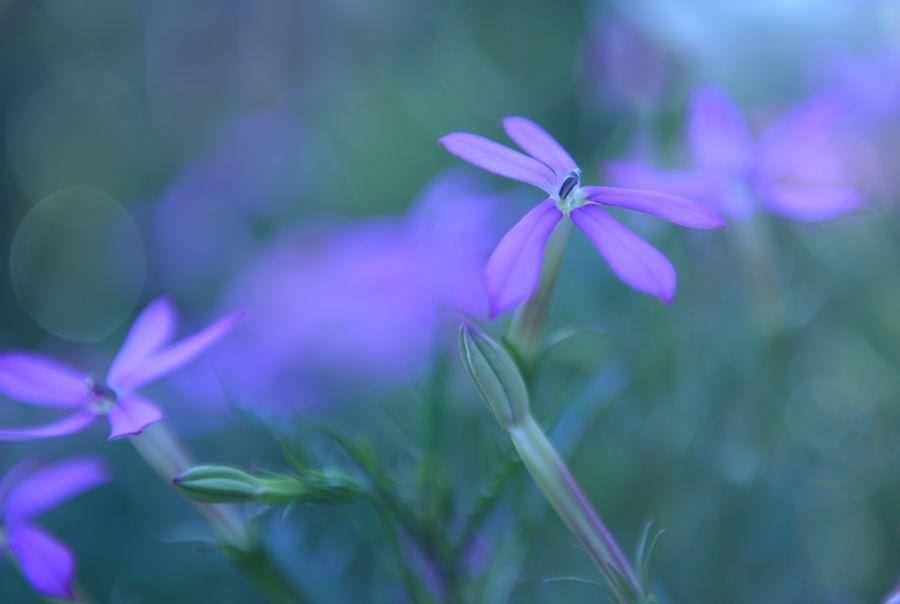 我が家の花たち あれっ-1