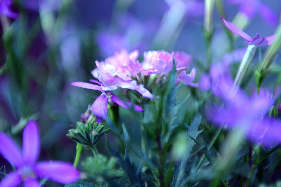我が家の花たち あれっ-2