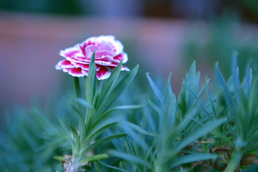 我が家の花たち あれっ-3