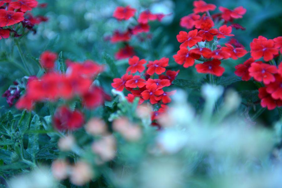 我が家の花たち あれっ-4