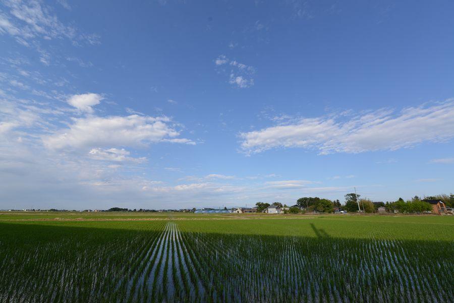 田と新幹線-4