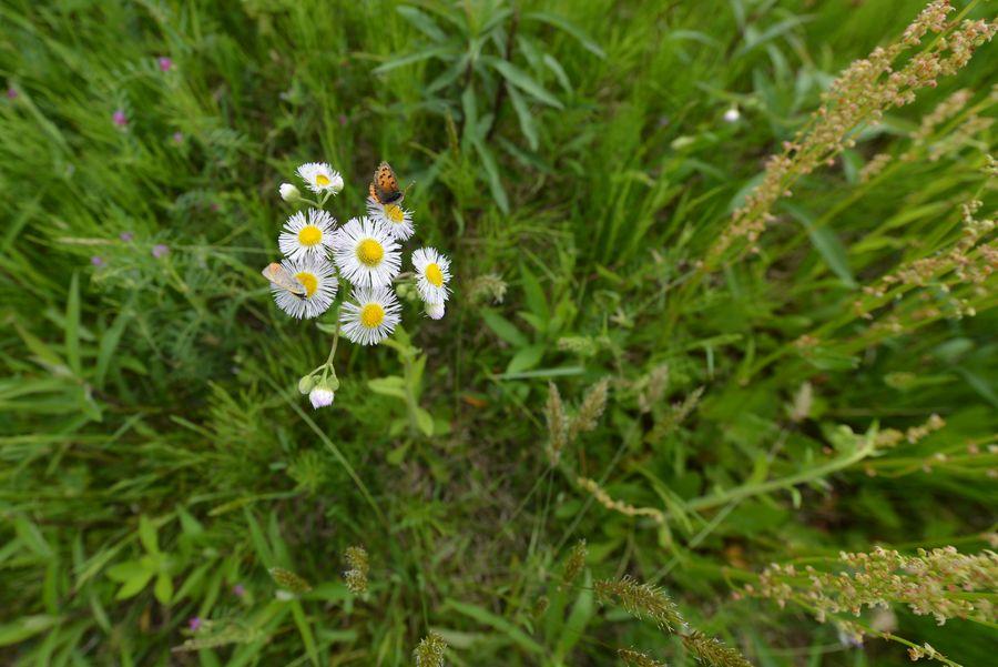 小さい花たち-4