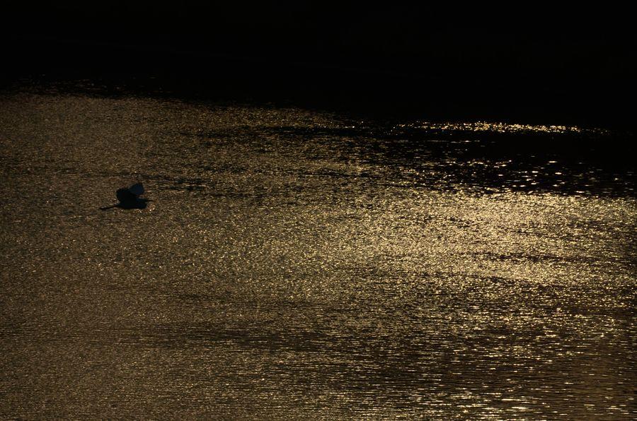 夕陽の川面-2