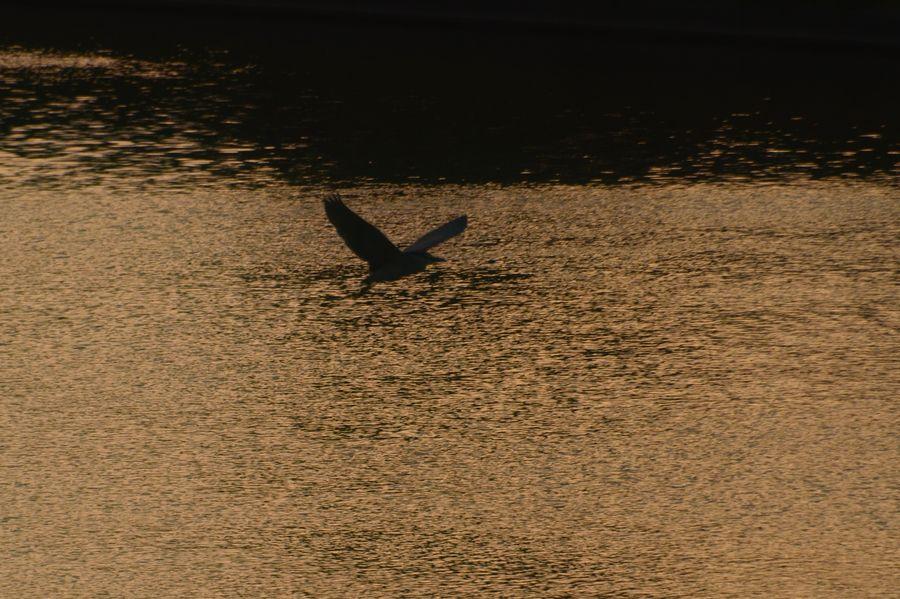 夕陽の川面-3