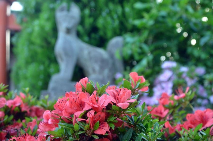 おキツネと花-5