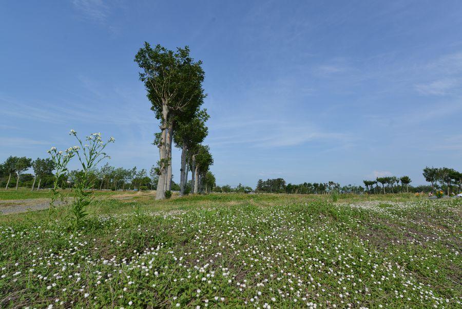 花とはざ木-2