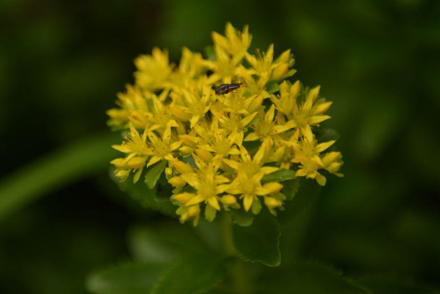 梅雨時の花たち-1