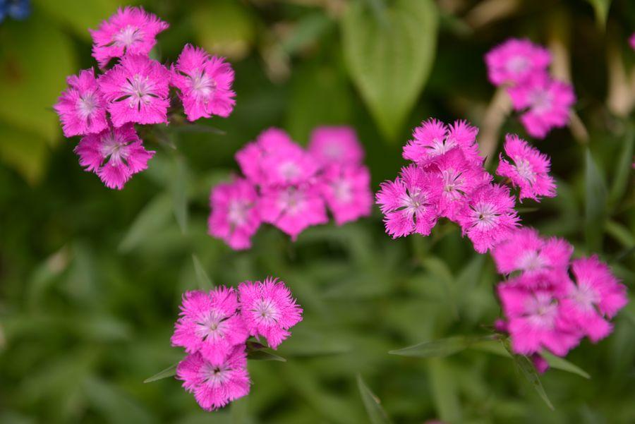 梅雨時の花たち-2