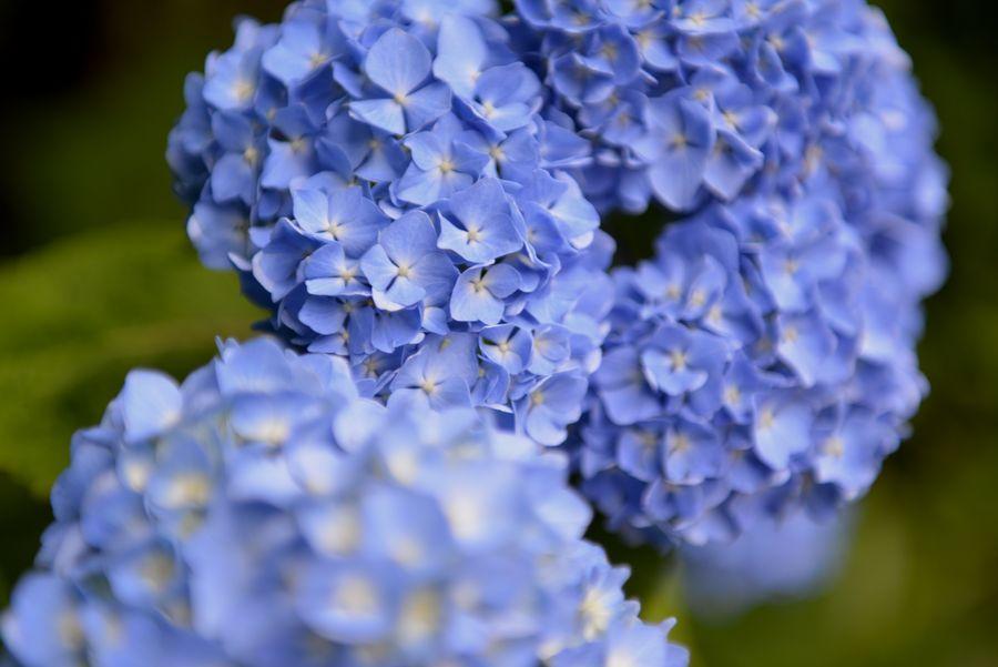 梅雨時の花たち-4