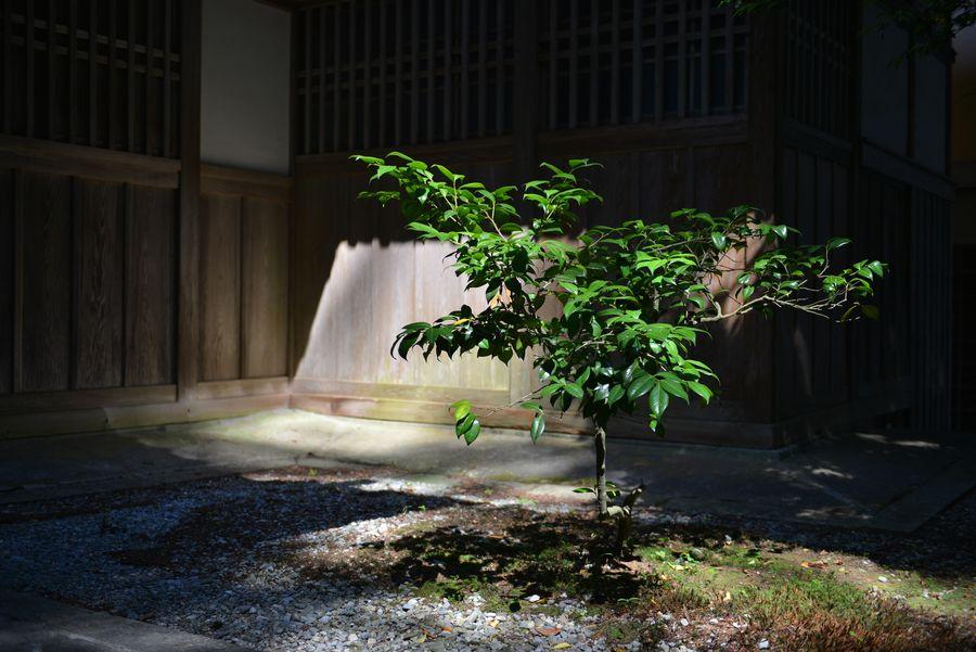 光射す 神社Ⅱ-2
