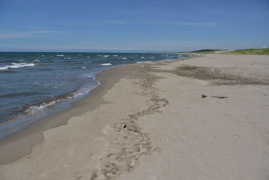 砂浜と鳶-4