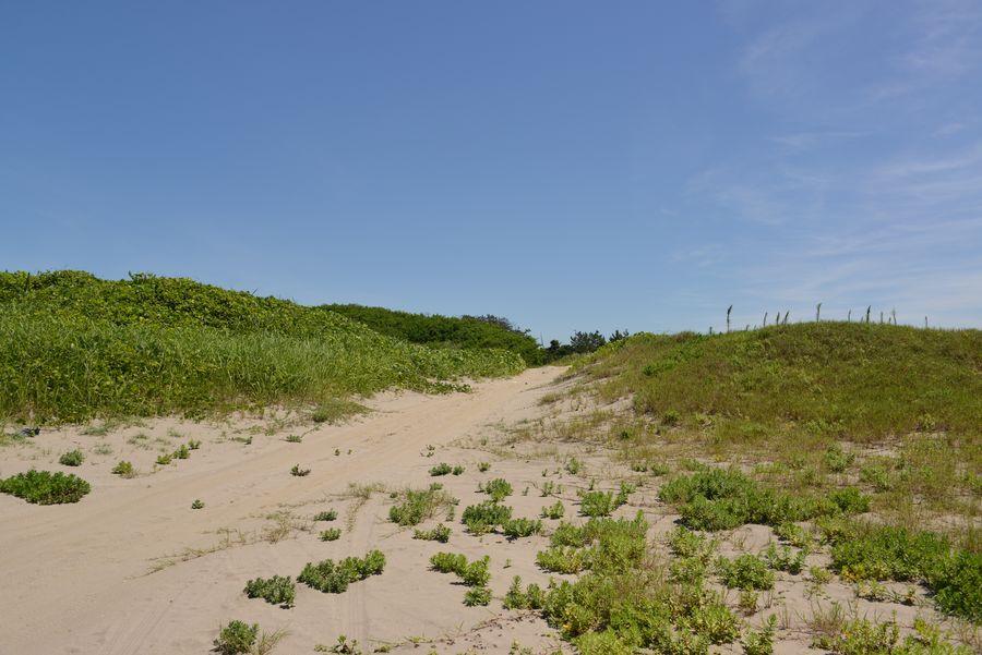 砂浜と鳶-5