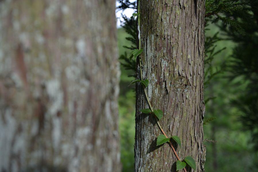 林の中に咲く-1