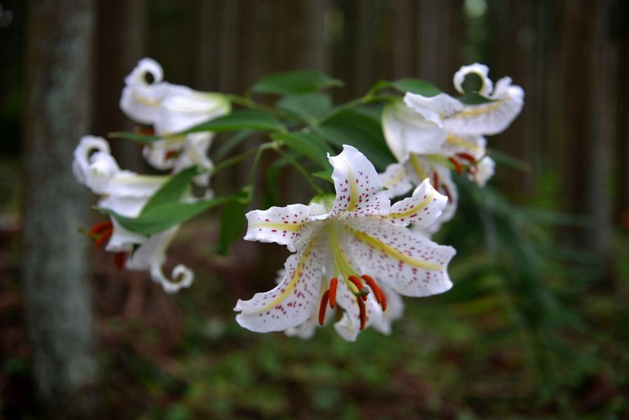 林の中に咲く-3