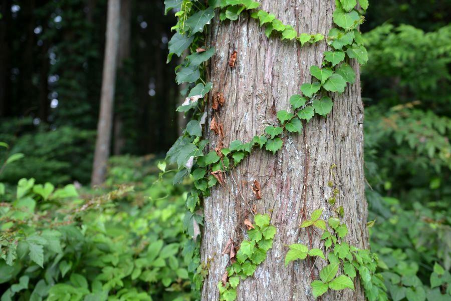 林の中に咲く-5