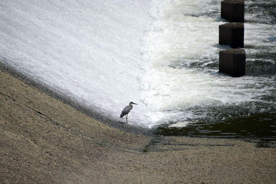 河口の堰-4