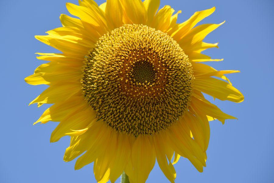 夏の花-1
