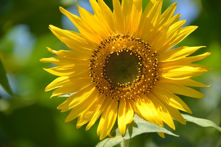 夏の花-2