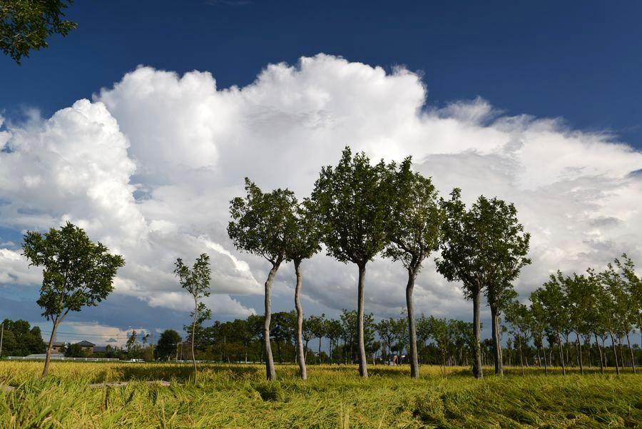 収穫期と雲-3
