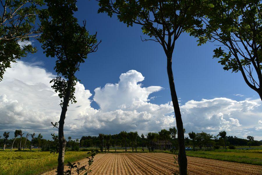 収穫期と雲-4