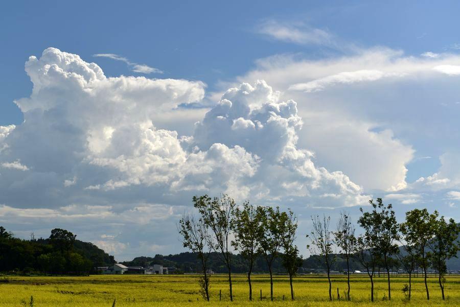 収穫期と雲-5