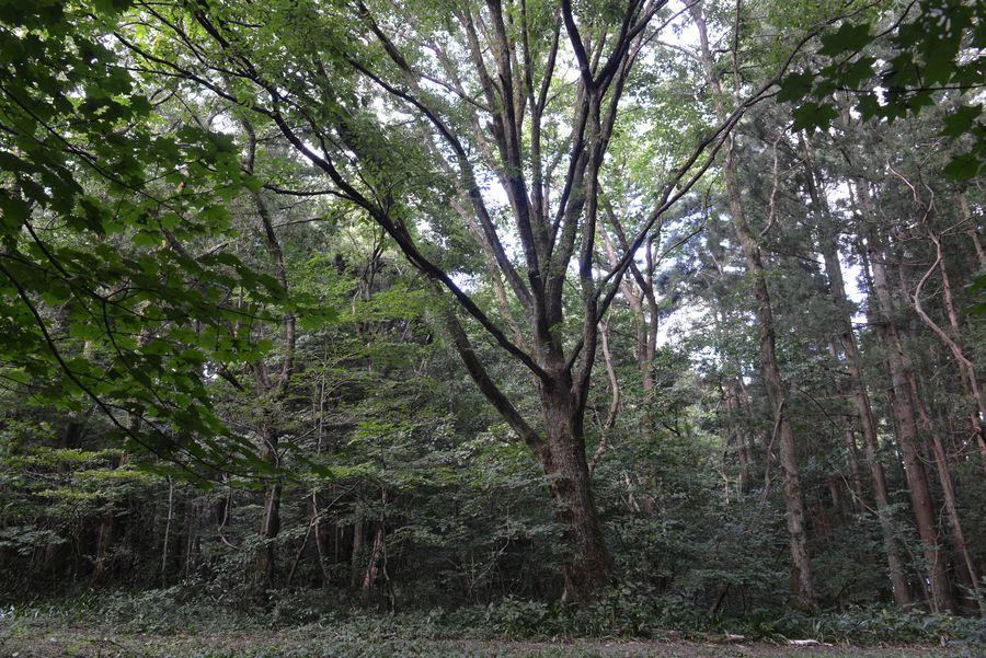 樹 ホワイトバランス-1