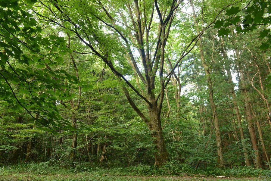 樹 ホワイトバランス-2