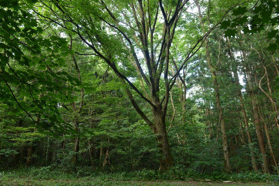 樹 ホワイトバランス-3