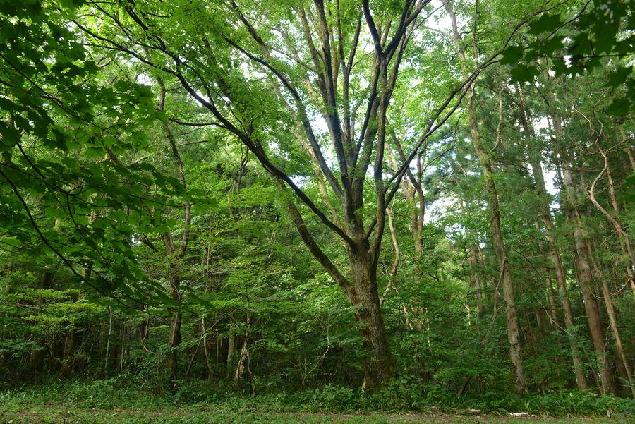 樹 ホワイトバランス-4