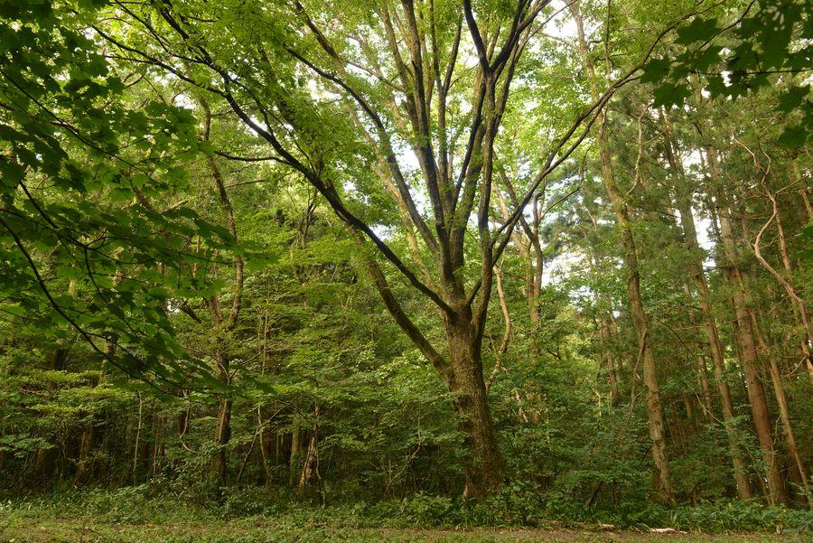 樹 ホワイトバランス-5