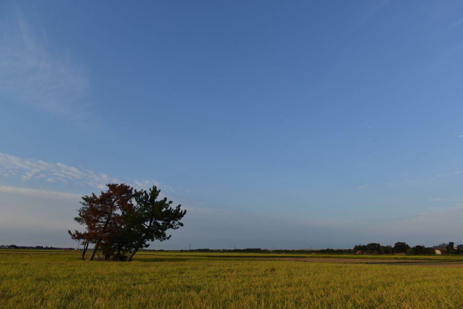 収穫期-2