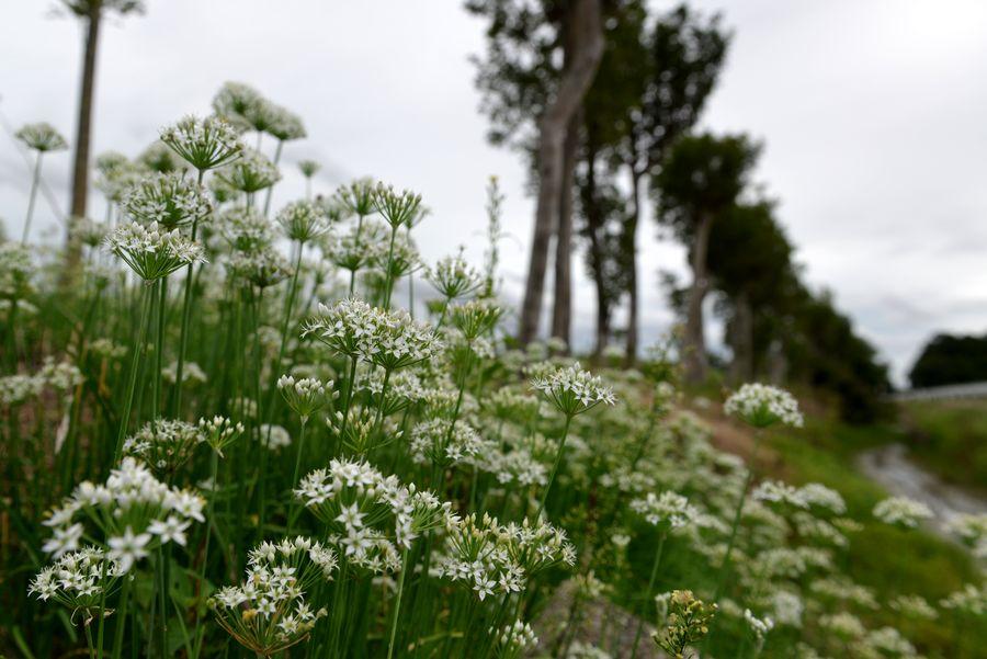 白い花と蜂-1