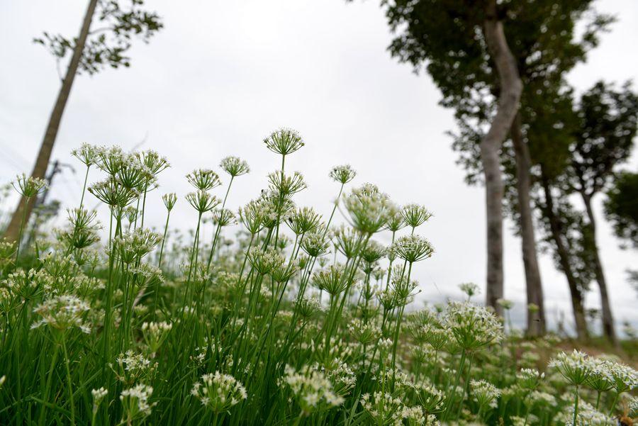 白い花と蜂-2