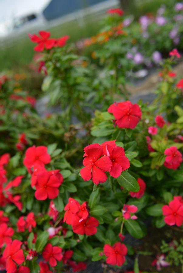 秋の小さな花たち-1