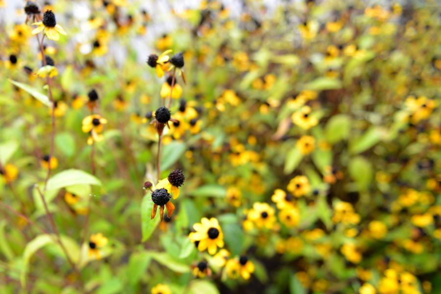 秋の小さな花たち-2